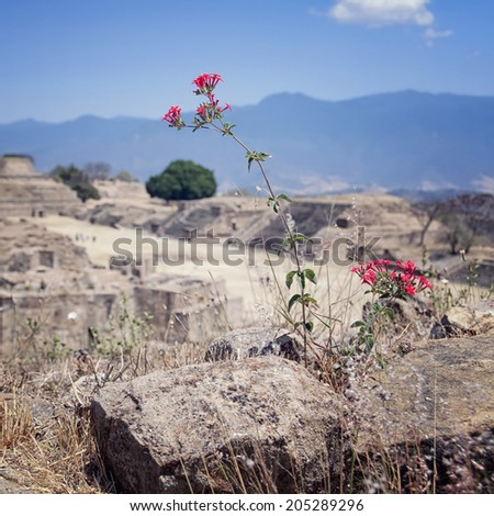 Close view of the flower at Monte Alban Ruins, Oaxaca, Mexico - stock photo