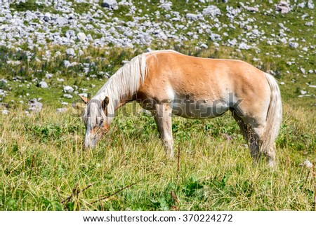 Close view on the horse in Alps Austria - stock photo