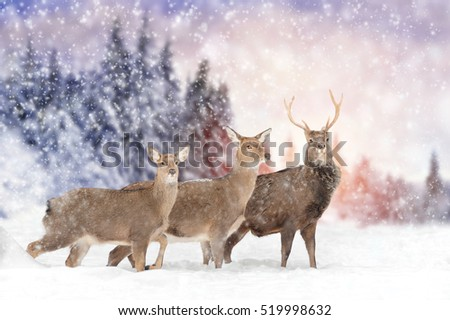 Close young deer in nature. Winter time