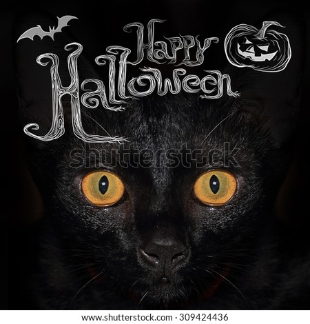 "Closed up at the eyes of black cat with wording ""Happy Halloween"" on the top of image?"