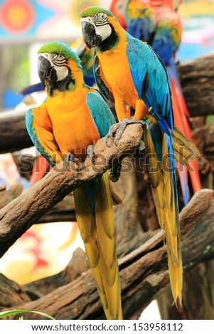 Closed Up Macaw on the tree  - stock photo