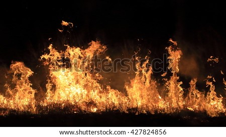 Closed up of wildfire on dark background. - stock photo