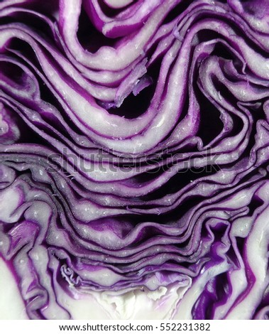 Closed up Pattern and Texture of Fresh Ripe Purple Cabbage Cut in Half