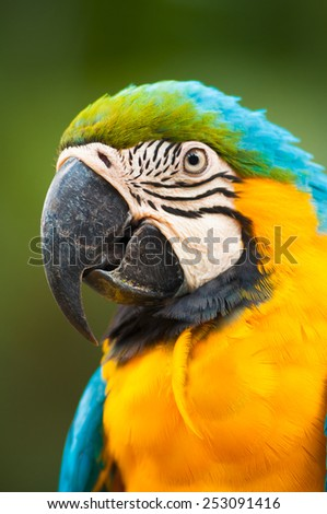 Closed up portrait of colorful Scarlet Macaw. - stock photo