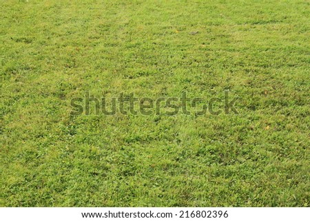 Closely cropped lawn in ray sun - stock photo