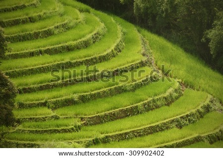 Closer view of the Rice Terraces scenic, patterns in nature - stock photo