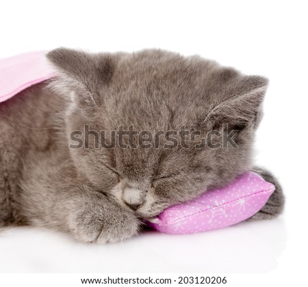 closeup baby kitten sleeping on pillow. isolated on white background - stock photo
