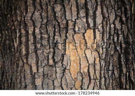 Closeup background of Tree bark texture - stock photo