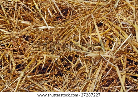 Closeup background shot of a pile of hay