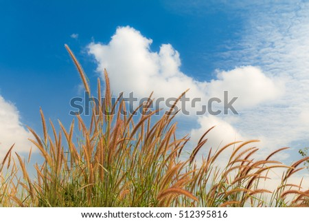 Closeup beautiful grass flowers with natural sky background texture