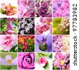closeup beautiful lilac and pink flowers collage - stock photo