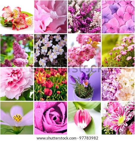 closeup beautiful lilac and pink flowers collage