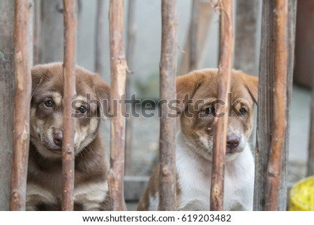 Closeup brown puppy in wood cage background