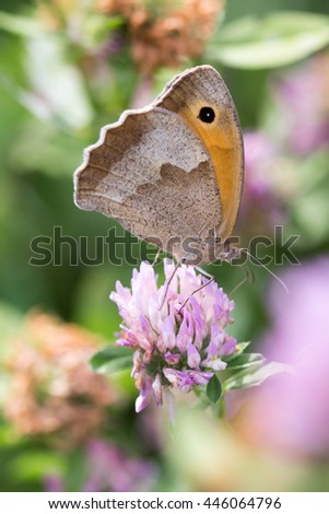 Closeup butterfly on flower - stock photo