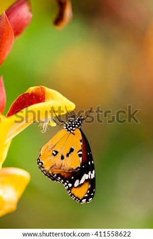 Closeup butterfly on flower blossom - stock photo