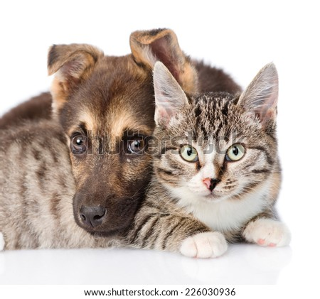 closeup cat and dog together. isolated on white background - stock photo