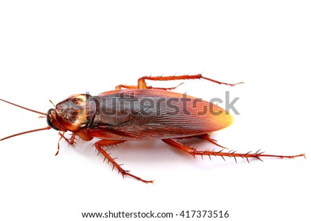 closeup cockroach isolated on white background. - stock photo