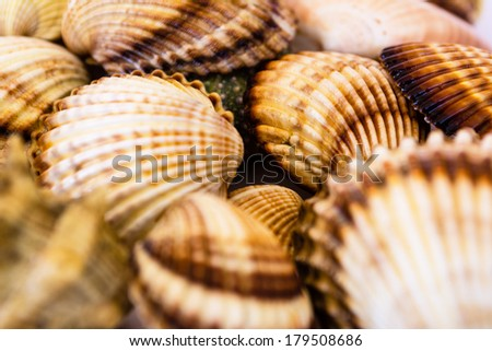 Closeup collection of different seashells - stock photo