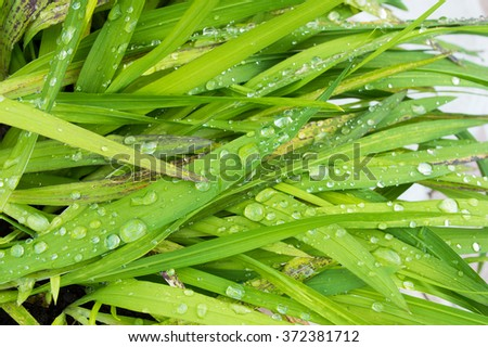 Closeup cropped image of lush green plant life with dew droplets - stock photo