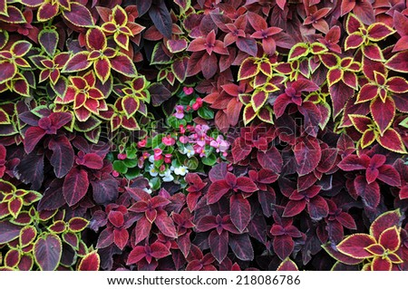 Closeup design of ground covering plants and ornamental flowers - stock photo