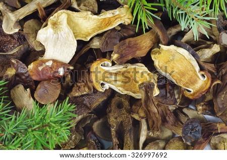 closeup dry mushrooms boletus as background texture - stock photo