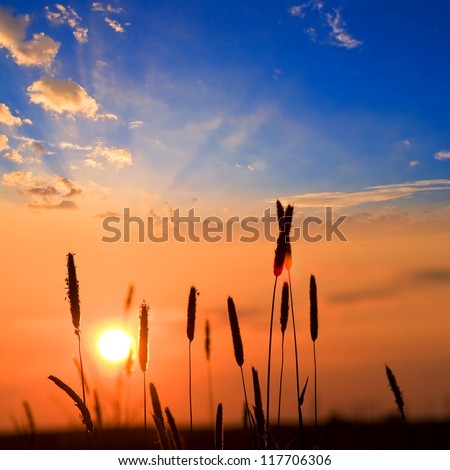 closeup ears on a sunset background - stock photo