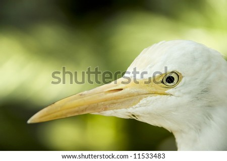 closeup egret - stock photo