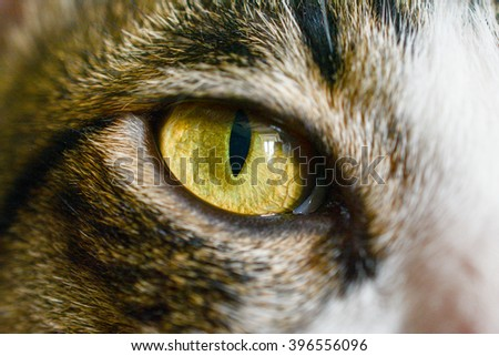 Closeup eye cat - stock photo
