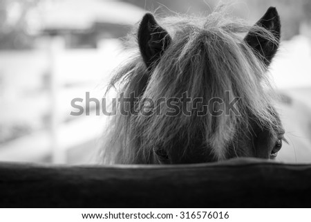 Closeup face of horse in stable, black and white color - stock photo
