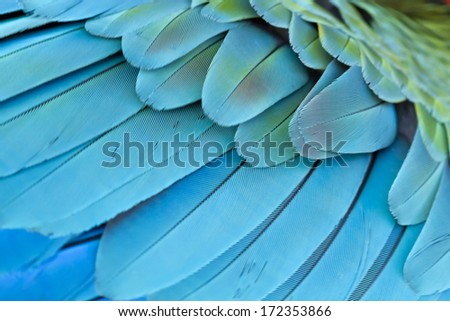 Closeup  feather Blue and Gold Macaw , thailand - stock photo