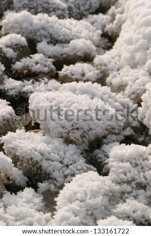 closeup fluffy frost on the grass in winter - stock photo