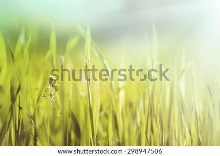 closeup fresh green grass, natural vintage  soft focus background - stock photo