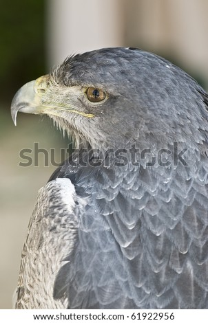 Closeup from an eagle in its environment. - stock photo