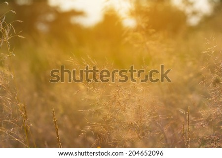closeup grass in a rays of sun - stock photo