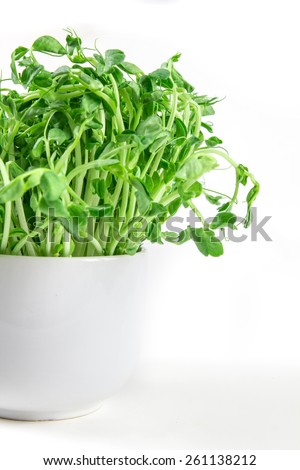 closeup green pea sprout  in the white cup - stock photo
