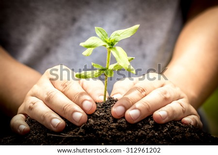 Closeup hand planting young tree in soil,save world concept - stock photo
