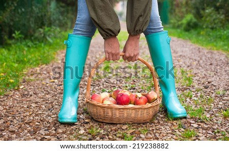 Closeup hands holding basket with yellow, red apples and rubber boots on young girl - stock photo