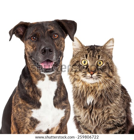 Closeup image of a cute adult mixed breed dog and cat looking forward at the camera - stock photo