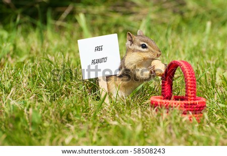 "Closeup image of a cute chipmunk in the grass with a little basket and peanuts with a sign with ""free peanuts"" written on it."
