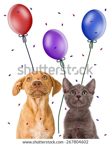 Closeup image of a cute young puppy and kitten together looking up at balloons and confetti - stock photo