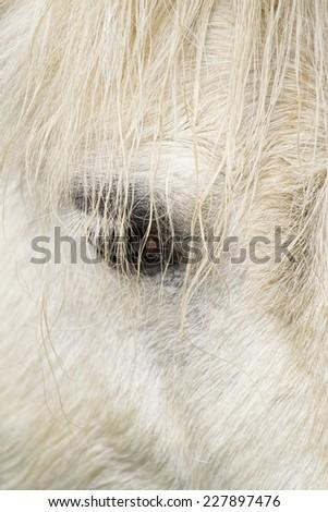 Closeup image of a white horse eye. - stock photo