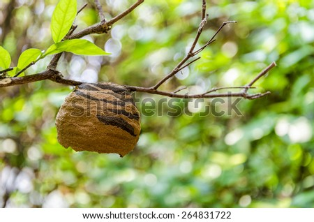 Closeup image of hornet's nest which built from 2 color clay hang on branch of tree - stock photo