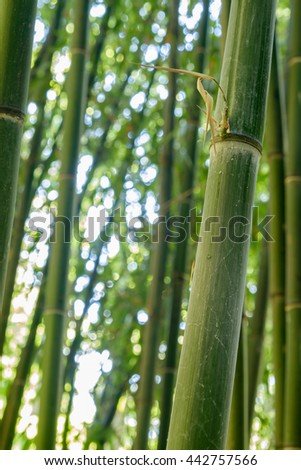 Closeup image of the details on a stalk of bamboo tree - stock photo