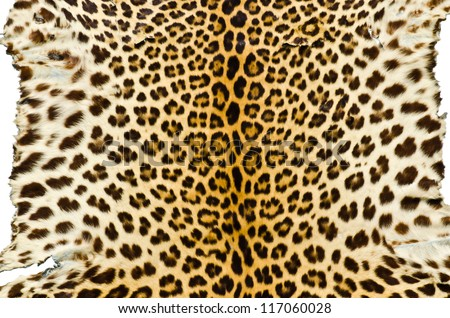 Closeup image of tiger skin for background user