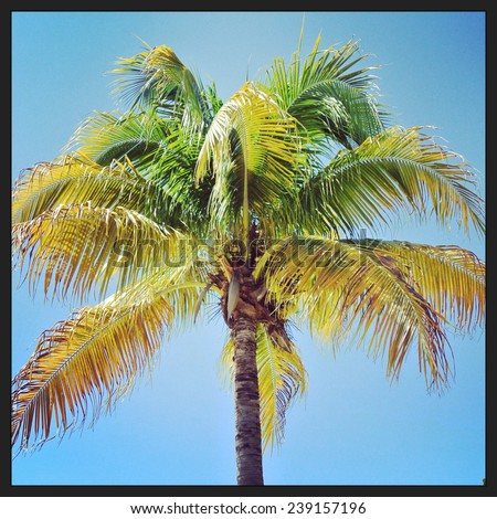 closeup instagram of palm tree swayingin the wind with blue sky - stock photo