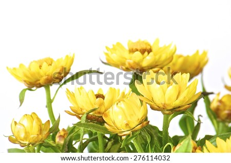 closeup, isolated, blooming, natural, vibrant, green, floral, white, spring, petal, flower, vector, yellow, bright, head, sunny, sunflower, orange, summer, blossom, bloom, sun, daisy, abstract, macro - stock photo
