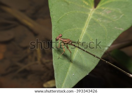 Closeup macro shot focus body of beautiful orange dragonfly with amazing colors resting on a twig. A dragonfly is an insect belonging to the order Odonata, suborder Anisoptera in Thailand - stock photo