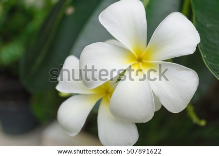Closeup natural view of white flower with copy space using as nature background or wallpaper.