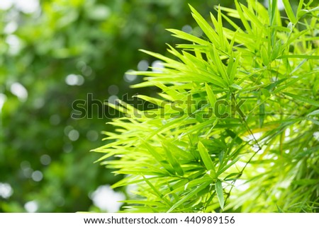 Closeup nature view of green leaf in garden at summer under sunlight. Natural sunny green plants landscape using as a background or wallpaper.