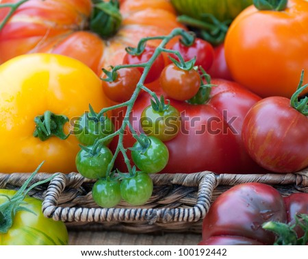 Closeup of a Basket Overflowing with Freshly Picked Tomatoes of Various Kinds from the Garden in Summer - stock photo